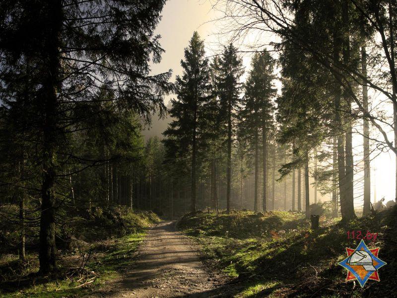 За сутки спасатели помогли троим заблудившимся в лесу